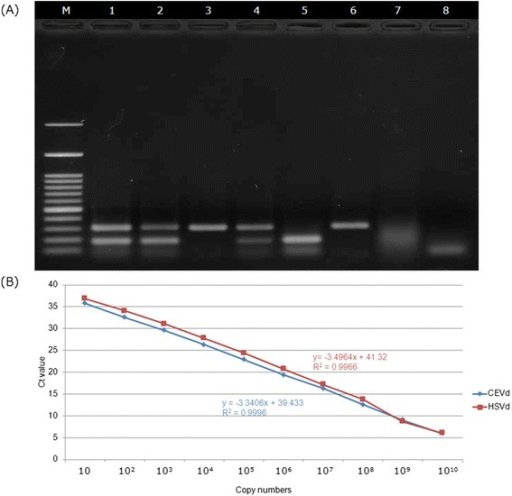 Establishment of multiplex real-time RT-PCR and one-step multiplex RT-PCR in detecting of CEVd and HSVd. (A) Standard curves of CEVd and HSVd for absolute quantification obtained by plotting Ct values versus actual pTOPO-CEVd and pTOPO-HSVd copy number. The Ct values for each dilution are the means of three replicates. (B) One-step multiplexe RT-PCR detected CEVd and HSVd transcripts alone and in combination. Samples A and B were collected from the field. Lane 1, viroids co-infection citrus sample; 2,3, unknown samples in the field; 4, Mixed 100 ng/μL RNA transcripts of plasmids of pTOPO-CEVd and pTOPO-HSVd; 5, 100 ng/μL RNA transcript of plasmid pTOPO-CEVd; 6, 100 ng/μL RNA transcript of plasmid pTOPO-HSVd; 7, healthy control; 8, water control; M, 100-bp molecular marker.