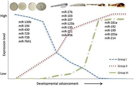 Schematic representation of expression patterns of miRNAs during early development of Atlantic cod. Group I miRNAs are highly expressed before and during MZT and then decrease; Group II miRNAs are highly expressed during organogenesis; and Group III miRNAs are highly expressed during the transition from larval to adult forms. Only selected miRNAs are depicted; see Additional file 3 for the full set of miRNAs.