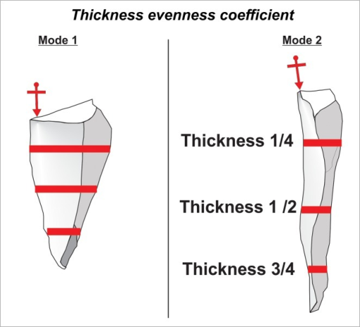 Thickness evenness coefficient.Arrows show points of percussion, whereas solid lines represent places on a flake where thickness was measured.
