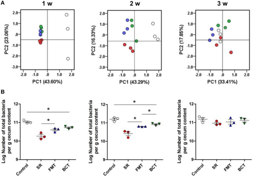 The recovery of intestinal microbiota in different mice groups. (A) PCA of the cecal microbiota in different experimental mice groups during the 3-week recovery. PC1 and PC2 account for 66.66, 59.62, and 51.26% of the variation in different weeks. Each symbol represents one microbiota (dot). White dots, healthy mice; red dots; SR mice, blue dots, FMT mice; green dots, BCT mice. (B) The population of total intestinal microbes in different mice groups detected by qPCR. *p < 0.05; w, week(s) after ceftriaxone treatment.