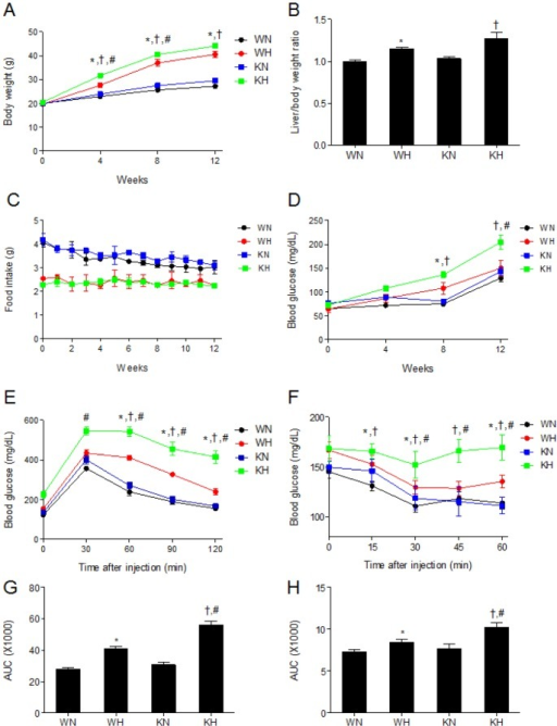 SIRT1 deletion aggravates HFD-induced weight gain and insulin resistance. (A) Body weights, (B) liver/body weight ratio, (C) food intake, (D) fasting blood glucose levels, (E) GTT, (F) ITT, (G) area under curve (AUC) for GTT and (H) AUC for ITT of WT and KO mice fed ND or HFD. Data are presented as mean±SEM. *p<0.05 for WH mice versus WN mice. †p<0.05 for KH mice versus KN mice. #p<0.05 for KH mice versus WH mice. WN, ND-fed WT mice; WH, HFD-fed WT mice; KN, ND-fed KO mice; KH, HFD-fed KO mice.