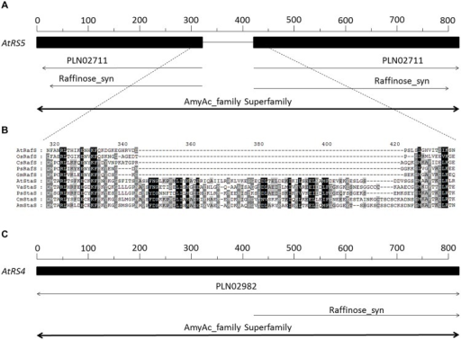 Sequence and phylogenetic analysis of AtRS4 and AtRS5. (A) Schematically shows the 783 amino acid long sequence of AtRS5 (A5g40390) from Arabidopsis thaliana. (B) Shows a section of a sequence alignment performed with Clustal Omega (Sievers et al., 2011) of RafS and StaS amino acid sequences, which revealed very high amino acid identity and similarity, except for a 80 amino acid long sequence block insertion, which is only present in the StaS. (C) Schematically shows the 876 amino acid long sequence of AtRS4 (At4g01970) from A. thaliana. RafS amino acid sequence from A. thaliana (AtRafS, gi/332195171), Oryza sativa subsp japonica (OsRafS, gi/115471135), Cucumis sativus (CsRafS, gi/124057819), Pisum sativum (PsRafS, gi/18181865) and Glycine max (GmRafS, gi/187610414). StaS amino acid sequence from A. thaliana (AtStaS, gi/332656706), Vigna angularis (VaStaS, gi/6634701), P. sativum (PsStaS, gi/13992585), Cucumis melo (CmStaS, gi/659101177) and Alonsoa meridionalis (AmStaS, gi/21038869).
