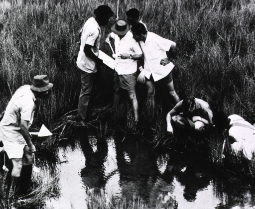 <p>Several scientists are conducting mosquito larvae counts around a small pool of standing water in a marshy area.</p>