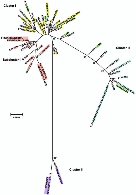 Minimum evolution tree. The tree was constructed using the matrix of pairwise differences between the 87 concatenated sequences for the 7 loci using maximum composite likelihood method for estimating genetic distances. Numbers are bootstrap values (1,000 replicates) >70%. Lavender, invasive lymphogranuloma venereum (LGV); gold, noninvasive, nonprevalent sexually transmitted infection (STI) strains; red, trachoma strains; blue, noninvasive, highly prevalent STI strains; green, putative recombinant stains. Scale bar indicates number of substitutions per site.