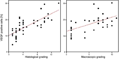 Correlation between the histological and macroscopic grade of osteoarthritis (OA) with expression of VEGF by chondrocytes. Significant positive correlations were found with a Spearman´s coefficient of 0.767 (p=0.01) and 0.518 (p=0.02).