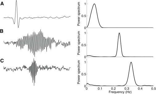 Spectral analysis of the decoding filters.( left) Temporal representation of filters followed by the ( right) normalized power spectral whose center frequencies are (A) 0.05 Hz, (B) 0.24 Hz, and (C) 0.33 Hz. Their waveforms remarkably resemble bandpass filters.