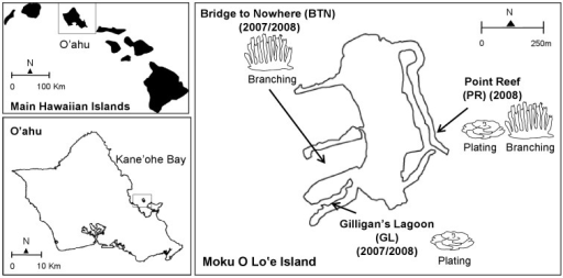 Location of study sites.Parent colonies and gametes were sampled at three sites around Moku O Lo'e Island: Bridge to Nowhere (BTN), Gilligan's Lagoon (GL), and Point Reef (PR). Moku O Lo'e Island is located in Kane'ohe Bay on the windward coast of the island of O'ahu, Hawai'i, USA. Montipora capitata colonies exhibited primarily branching morphologies at BTN, plating at GL, and both branching or plating morphologies at PR.