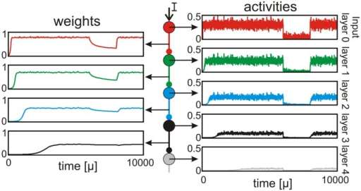 A noisy external input leads to propagation of activity along several stages. The first neuron (red) receives a time varying (noisy) input which leads to a strong post-synaptic synapse. Thus, the activity is transmitted to the next stage (green) resulting in high (but smaller than the input) activity and weight. This transmission occurs along several stages until the activity vanishes (gray). Even a short decrease of the input can be compensated quite fast.