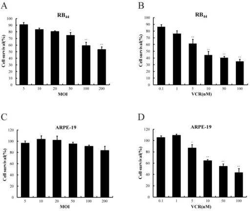 Growth inhibition following treatment with adenovirus (SG600) or vincristine (VCR) on HXO-RB44 (A,B) cells and normal cells (C,D). Bars: standard deviation. The results are representative of three independent experiments and of four replicates in each experiment. ** p < 0.01 relative to the SG600 or VCR treatment group.