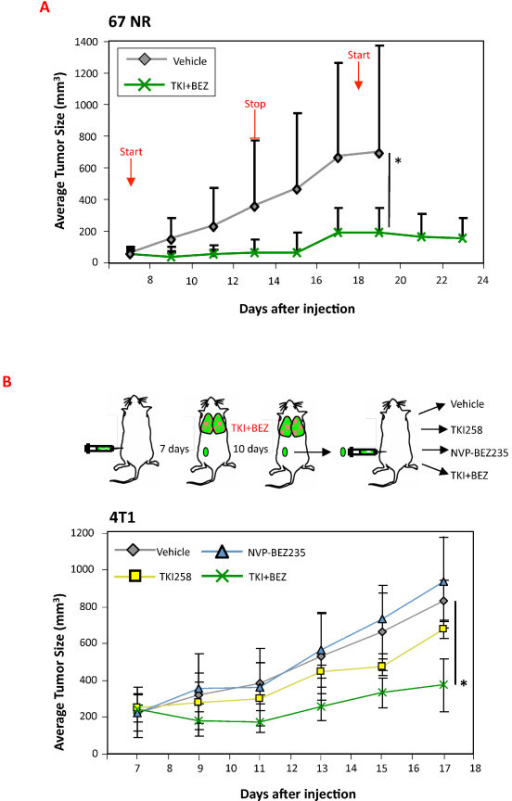4T1 and 67NR tumors retain prolonged sensitivity to treatment with the dovitinib + NVP-BEZ235 combination. (A) Groups of 67NR tumor-bearing mice (n = 5) were treated daily with vehicle (PEG300), or with a combination of dovitinib (TKI, 20 mg/kg) and NVP-BEZ235 (10 mg/kg) for 7 days. Treatment was stopped for 5 days then resumed for 6 days and tumor growth was monitored. (B) Groups of 4T1 tumor-bearing mice (n = 6) were treated daily with vehicle (PEG300) or the combination of dovitinib (TKI, 20 mg/kg) + NVP-BEZ235 (10 mg/kg). After 10 days treatment, residual tumors were enzymatically digested, hematopoietic cell-depleted and 0.5 × 106 were re-injected into naïve mice (scheme in top panel). Starting 7 days after injection, groups of mice (n = 5) were treated daily for 11 days with (PEG300), dovitinib (TKI, 20 mg/kg), NVP-BEZ235 (10 mg/kg) or a combination of both, and tumor growth was monitored (lower portion of B). *P < 0.05 (Mann-Whitney U-test).