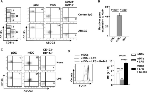 LPS induces over-expression of ABCG2 in blood mDCs.(A) PBDCs were purified from peripheral blood by PBDC isolation kit. Surface ABCG2 expression levels were measured in CD11c−CD123+ pDCs, CD11c+CD123inter mDCs and CD11c−CD123− cells by flow cytometry. (B) Real-time PCR analysis of ABCG2 gene expression, presented relative to that of β-actin, in purified pDCs, mDCs and CD11c−CD123− cells (D/N). Data are representative or the average of analyses of 4 samples from 4 donors for each group. (C) PBDCs were stimulated with LPS for 24 hours. ABCG2 expression in gated pDCs, mDCs and CD11c−CD123− cells were analyzed on a flow cytometry. Data are representative of analyses of 3 samples from 3 donors. (D) Mitoxantrone efflux in purified mDCs and LPS-stimulated mDCs in the presence or absence of Ko143 was analyzed by flow cytometry (left panel) and mean fluorescence intensity (MFI) was shown (right panel). Data are representative or the average of analyses of 3 samples from 3 donors.