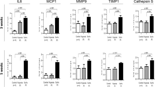 Differential expression of PAH-related inflammatory genes in Sugen/hypoxia rats.Messenger RNA expression level of IL6, MCP1, MMP9, TIMP1, and cathepsin S was compared among Sugen/hypoxia, hypoxia, and control rats at 3 or 5 weeks after initial treatment, with a one-way analysis of variance followed by Tukey-Kramer multiple comparison test. Data are expressed as fold-change compared with the control group. Values are mean ± SD. Abbreviations were described in Fig. 8.