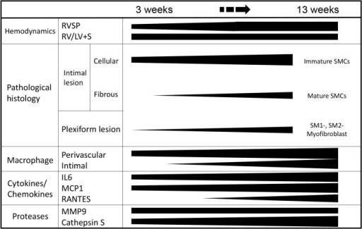 Summary: Phenotypically modulated SMCs and inflammation in the progression of obstructive pulmonary vasculopathy.Abbreviations are described in Figs. 1, 2, and 8.