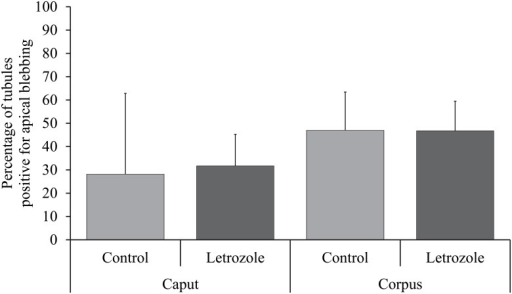Apical blebbing in letrozole treated versus control littermates.Bars represent least squares means with SEM from 4 and 5 animals in the caput and corpus epidiymis, respectively. Apical blebbing in caput and corpus epididymis were not altered when estrogens were reduced.