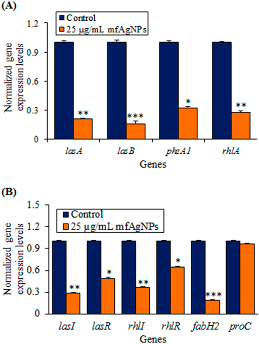 Effect of mfAgNPs on the expression of QS-controlled genes of PAO1.(A) The expression of genes namely lasA, lasB, phzA1, and rhlA, lasI, lasR, rhlI, rhlR, fabH2, and proC (housekeeping gene) was assessed in mfAgNPs treated or untreated control cDNA by RT-qPCR. The relative magnitude of gene expression level was defined as the copy number of cDNA of each gene in the planktonic cells normalized by the copy number of cDNA of the corresponding gene in planktonic cells without mfAgNPs. Error bars indicate the SD of 3 measurements. ***P < 0.001 Vs control. **P < 0.01 Vs the control. *P < 0.05 Vs control. The same volume of H2O was added to the control treatments.