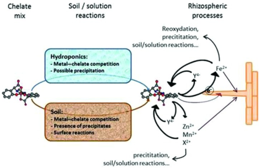 Proposed mechanisms of metal chelates interaction in soils and in nutrient solution, and plant uptake. See explanation in the text.