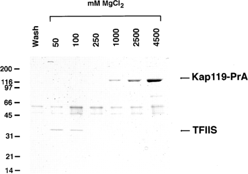 Kap119–PrA pulls out TFIIS from the cytosol. A cytosolic fraction from a Kap119–PrA strain was incubated with IgG– Sepharose. The last wash fraction and fractions subsequently  eluted with a step gradient of 50–4,500 mM MgCl2 were analyzed  by SDS-PAGE and Coomassie blue staining. The Kap119–PrA  elutes between 1,000 and 4,500 mM MgCl2. The major band of  ∼35 kD eluting at 50 and 100 mM MgCl2 was identified by mass  spectrometry as the transcription factor TFIIS.