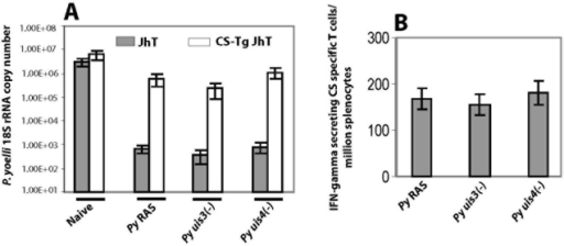 CS is a powerful protective T cell antigen in both P. yoelli RAS and uis3(-), uis4(-) GAPs.BALB/c CS-Tg JhT (−/−) mice were primed and boosted with 1×105 P. yoelli RAS or with uis3(-) or with uis4(-) GAPs. All immunized mice were challenged with 1×104 wild type infectious sporozoites and infected livers were isolated 42 hours post infection (A) Liver stage burden in indicated groups of immunized mice were assessed by measuring the parasite specific 18S rRNA copy numbers by q-RT PCR. The results are expressed as mean±s.d of 18S rRNA copy numbers from 5 mice per group. (B) IFN-gamma ELISPOT assay to quantify CS specific T cells from indicated groups of JhT (−/−) immunized mice. Results are expressed as mean±s.d of CS-specific CD8+ T cells obtained from 5 immunized mice per group.