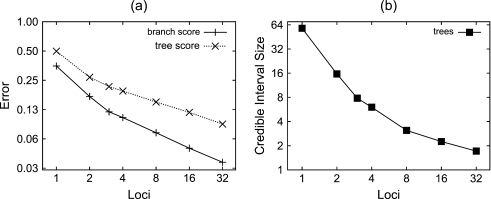 "(a) Species tree estimation error and (b) 95% credible interval size as a function of the number of loci. The number of individuals sampled per species is four for all experiments. Each graph point is obtained by averaging the error measure (described in the main text) over 100 analyses of simulated data sets. The ""branch score"" is a measure of the distance in tree space of the estimated species tree to the true tree, incorporating both topology and divergence times. The ""tree score"" is a measure of the distance between the estimated species tree and the true species tree incorporating information about the population size as well. For details of the tree metrics used, see main text."