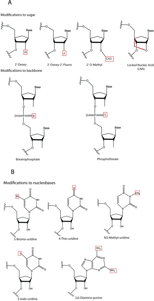 A) Common chemical modifications to siRNA sugars and backbone. B) Chemical modifications to nucleobases.
