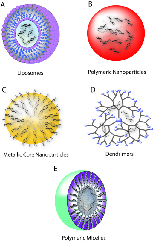 polymeric nanoparticles in drug delivery Because of their small size, nanoparticles are well-suited for effective drug  delivery the small size affects their movement through cell and.