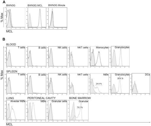 Rat MCL is expressed on monocytes, macrophages and granulocytes. A,mAb WEN42 is specific for MCL. The specificity of WEN42 was tested in flow cytometry analysis of BWN3G cells stably expressing rat MCL or Mincle. B, Flow cytometry analysis of rat MCL surface expression on different cell types isolated from different organs, as indicated. Histograms display cell subsets gated as described in the materials and methods section. Black line histograms: MCL. Filled grey histograms: isotype control.