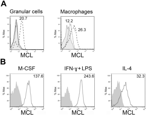 Regulation of MCL surface expression under the effect of different stimuli.A, Rats were injected intraperitoneally with zymosan, peritoneal cells were obtained after 24 h and stained with mAbs for flow cytometry analysis. Discontinuous line histogram shows staining in the zymosan treated group, dotted line histogram shows MCL staining in the PBS control group. Histograms display MCL expression on granular cells (including mast cells, eosinophils and neutrophils) and macrophages (MΦ) as indicated. The MCL+ fraction of granular cells likely reflects influx of neutrophils from the blood. MFI values are shown, calculated as the median of the fluorescence intensity. B, Resident peritoneal macrophages were cultured overnight with the indicated substances. Solid line histogram shows MCL staining. Grey filled histograms correspond to isotype controls.
