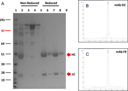 Analysis of purified recombinant mAbs D2 and F9 on 4-12% SDS-PAGE. The gel was stained with Coomassie Blue R250 (A). Lane 1: SeeBlue Plus2 Pre-Stained Standard (Invitrogen); Lanes 2 and 3: non-reduced mAb D2; Lanes 4 and 5: non-reduced mAb F9; Lanes 6 and 7: reduced mAb D2; Lanes 8 and 9: reduced mAb F9, at neat, and 1 in 10 dilutions. Analytical size exclusion chromatography of protein-A purified recombinant mAbs D2 and F9 at 280 nm are shown in panels B and C, respectively.