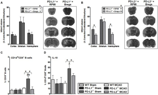 Bregs decrease infarct volumes in male PD-L2-/- mice, but are dispensable when transferred to PD-L1-/- mice 4 h after MCAO. (A) Intravenous transfer of 5 million IL10+ B-cells 4 h after surgery to induce MCAO in PD-L1-/- mice 96 h following 60 min of MCAO compared to intravenous transfer of RPMI vehicle (no cells) and its representative 2,3,5-triphenyltetrazolium chloride (TTC) stained cerebral sections 96 h following 60 min of MCAO. (B) Intravenous transfer of 5 million IL10+ B-cells 4 h after surgery to induce MCAO in PD-L2-/- mice 96 h following 60 min of MCAO compared to intravenous transfer of RPMI vehicle (no cells) and its representative TTC stained cerebral sections 96 h following 60 min of MCAO. Significance values represent mean ± SEM. *p < 0.05, **p < 0.01. Splenocytes from sham-treated and MCAO-subjected WT, PD-L1-/- and PD-L2-/- mice were harvested 96 h after MCAO (60 min) and assessed for expression of: (C) CD1dhiCD5+CD19+ (Breg) cells and (D) IL-10 production by gated Breg cells. Data are representative of two independent experiments with spleens processed from four to five individual mice (mean ± SEM). Significant differences between sample means are indicated (*p ≤ 0.05 compared to the PD-L1-/- mice, post MCAO). Significant differences within the strains are indicated (#p ≤ 0.05 and ###p ≤ 0.001 as compared to its respective sham-treated counterparts).