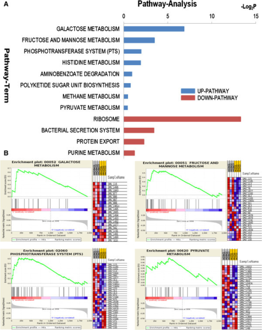 "KEGG pathway analyses for differentially expressed genes. (A) Significant up- and down-regulated pathways upon hyperosmotic challenge. P-value < 0.05 and FDR < 0.25 were used as a threshold. Log2P is the logarithm of P-value. (B) Gene set enrichment analysis (GSEA) of representative up-regulated KEGG pathways under short-term hyperosmotic stress. The four scoring plots represent galactose metabolism (upper left), fructose and mannose metabolism (upper right), phosphotransferase system (lower left) and pyruvate metabolism (lower right) with FDR of 0.010, 0.054, 0.110, and 0.184 respectively. The upper left section of each plot shows the progression of the running enrichment score and the maximum peak therein. The middle left section shows the genes in the pathways as ""hits"" against the ranked list of genes. The bottom left section shows the histogram for the ranked list of all genes in the expression data set. The right section of each plot shows the expression intensity of genes mapped into each pathway: red (high expression value), blue (low expression value)."