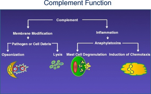 Complement function. The two primary functions of the complement system are to modify pathogens and self-debris with clusters of complement fragments (opsonization). This, in turn, facilitates interaction with complement receptors and, in some bacteria and viruses, induces lysis. The second function is to promote the inflammatory response. Complement fragments C3a and C5a generated during activation of the cascades stimulate many cell types. In the case of mast cells, release of immunomodulatory granules also attracts phagocytic cells into the area of inflammation (chemotaxis)