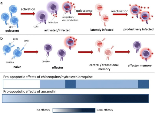 Comparison of the susceptibility to chloroquine/hydroxychloroquine and auranofin of the cellular subsets involved in HIV production and persistence. Shown in the figure is a schematic depiction of a activation and b differentiation stages of CD4+ T-lymphocytes and their correlation with viral production, latency and viral reactivation. Both chloroquine/hydroxychloroquine and auranofin can influence these transitions by exerting a pro-apoptotic effect, the efficacy of which is graphically exemplified by the intensity of the blue color in the corresponding rectangles. Efficacy gradients are based on data derived from Refs. [45, 48, 50].