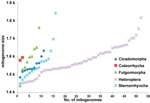 The size variation of mitogenomes from Hemiptera.