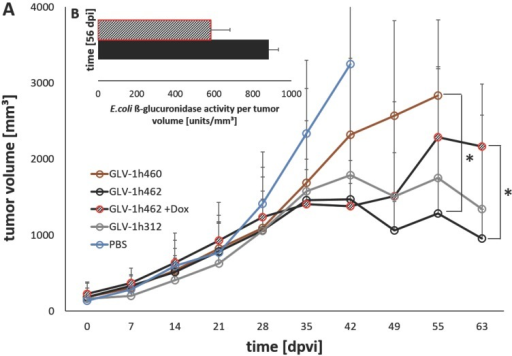 Viral activity and oncolytic potential of tested rVACV in PANC-1 xenograft bearing nude mice A) Tumor volume measurements of PANC-1 tumors untreated (PBS) or treated with GLV-1h460, GLV-1h312 and GLV-1h462 (n=3-5). Significant smaller tumor volume of uninduced non-melanogenic GLV-1h462 colonized PANC-1 tumors 55 dpvi compared to GLV-1h460 infected tumors and 63 dpvi compared to dox induced melanin synthesizing GLV-1h462 injected PANC-1 tumor bearing mice (p <0.05). B) Escherichia coli beta-glucuronidase activity assay of blood serum samples of PANC-1 xenograft bearing mice injected with GLV-1h462. GusA-activities are normalized by tumor volume as a correction factor.
