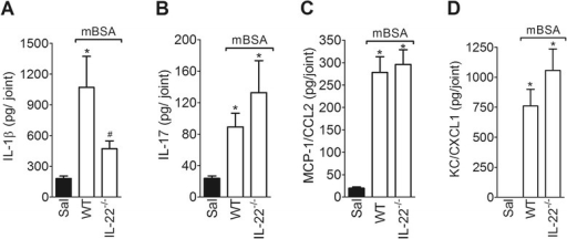 IL-22 differentially regulates local pro-inflammatory cytokines and chemokines in the early phase of AIA. The concentrations of IL-1β (a), IL-17 (b), MCP-1/CCL2 (c) and KC/CXCL1 (d) in the knee joint injected with mBSA (30 μg) or saline in WT and IL-22−/− mBSA-immunized mice were determined at 3 h after challenge. The levels of cytokines and chemokines were evaluated by ELISA. Data are the means ± SEM (n = 5). *P < 0.05, compared with the saline group; and #P < 0.05, compared with the mBSA group. (−/−) deficient, AIA antigen-induced arthritis, ELISA enzyme-linked immunosorbent assay, IL interleukin, KC/CXCL1 keratinocyte-derived chemokine, mBSA methylated bovine serum albumin, MCP-1/CCL2 monocyte chemoattractant protein-1, WT wild-type