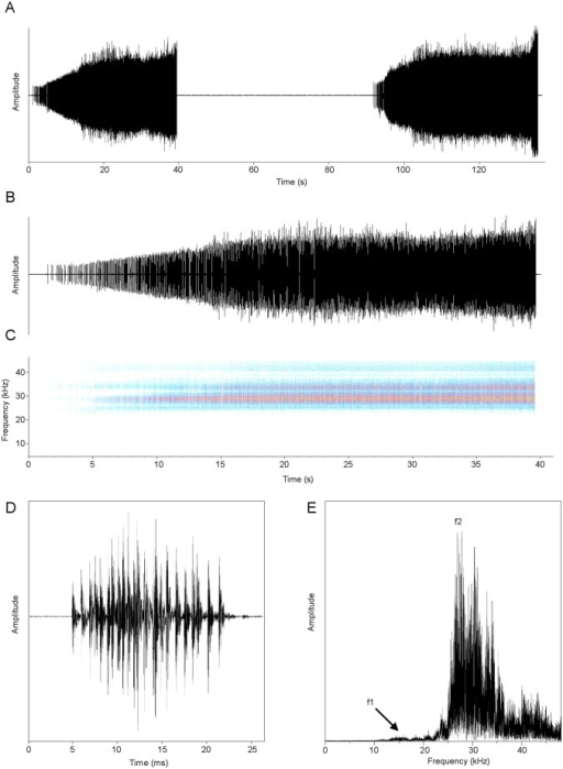 Calling song of Pixibinthus sonicus.(A) Oscillogram showing two successive trills; (B) detailed oscillogram and (C) sonogram of one trill; (D) oscillogram of one syllable; (E) and linear spectrogram of one echeme. Symbols: f1, fundamental frequency; f2, second harmonic (dominant frequency).