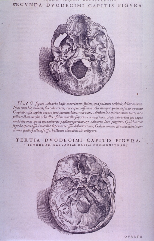 <p>Two views of the base of the skull, from above and below.</p>