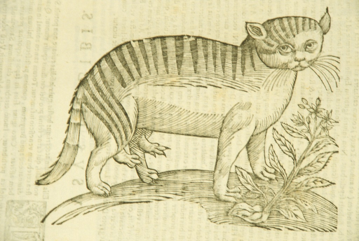 <p>Illustration of a cat.</p>