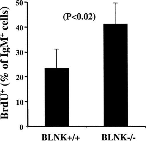 Turnover of splenic B cells in TG1 BLNK−/− mice. Groups of five TG1 BLNK+/+ and TG1 BLNK−/− mice were continuously fed with BrdU in drinking water for a period of 1 wk and splenic B220+IgM+ cells were stained for their intracellular BrdU content. Statistical significance is determined by a paired two-tailed Student's t test.