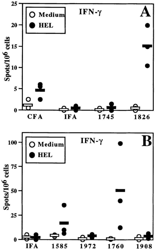 CpG ODN enhance HEL-specific IFN-γ production by BALB/c splenocytes.  Mice were immunized as in Fig.  1 with 100 μg ODN/mouse in  A and 30 μg ODN/mouse in  panel B. After 3 wk, splenocytes  were isolated and incubated with  HEL (closed circles) or medium  alone (open circles). ELISA spot  assay was performed and spots  were quantitated by a computerized image analysis program.  Each point represents the mean  number of spots per well for one  mouse (assayed in duplicate);  horizontal bars indicate the mean  of points for each group of mice.  Similar results were observed in  five independent experiments  with CpG- and non–CpG ODN  in BALB/c mice.