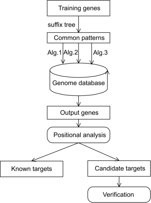 The outline of general methodology. The training genes of known HIF-1 targets are built into a suffix tree, and a set of common patterns are extracted from the suffix tree. Common patterns (including the set of common patterns and consensus sequences) are used to search the human genome database using the suffix tree algorithm. Using positional analysis, we analyze the output genes according to the relative locations of HIF-1 binding sites in the genes, and define the output genes with HIF-1 binding sites upstream of translational start site as potential HIF-1 targets. The potential HIF-1 targets are divided into two groups, known HIF-1 target genes and the candidate target genes. Finally, the candidate novel target genes are validated using available microarray data in the literature and tested in the biological lab.