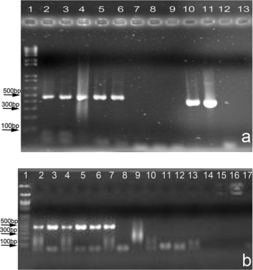 Agarose gel electrophoresis, Human HV1 PCR, Product size ∼440 bp.a) Evaluation of different surface sterilization protocols. Lane 1: DNA ladder, 2: Ac, 3:Al, 4:Bl, 5:AlBl, 6:AlAc, 7:AcBl, 8:AlAcBl, 9,12:Extract control, 10:Alcohol, 11:Spike, 13: PCR -ve. b) Effectiveness of surface sterilization. Halite crystals (modern Saline Valley) spiked with different amounts of human DNA. Lane 1: DNA ladder, Lanes 2,3,10,11: 1.5 ng spike, Lanes 4,5,12,13: 3.0 ng spike, Lanes 6,7,14,15: 4.5 ng spike, Lanes 8,9,16,17: no spike. Lanes 2–9: no surface sterilization. Lanes 10–17 surface sterilized.