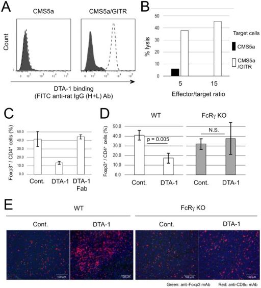 DTA-1-mediated depletion of tumor-infiltrating CD4+ Foxp3+ Treg cells by ADCC.(A) DTA-1- (dotted line) or isotype control (solid line)-treated CMS5a and murine GITR gene-transfected CMS5a (CMS5a/GITR) cells were stained with a FITC-conjugated anti-rat IgG (H+L) antibody and analyzed by flow cytometry. (B) CFSE-labeled CMS5a and CMS5a/GITR cells were used as targets. The mixture of IFN-γ-activated RAW264.7 cells (effector cells) and target cells were incubated for 12 hrs with control IgG or DTA hrs with control IgG or DTA-1 at effector/target ratios of 5 and 15. (C) Frequency of Foxp3+ cells in tumor-infiltrating CD4+ cell population at 3 days after i.t. DTA-1 or Fc-digested DTA-1 (DTA-1 Fab) treatment was measured by flow cytometric analysis. (D) Frequency of Foxp3+ cells in tumor-infiltrating CD4+ cell population at 3 days after DTA-1 i.t. treatment in wild-type or FcRγ KO mice was measured by flow cytometric analysis. By Student's t-test, the decrease in the frequency of Foxp3+ cells in DTA-1-treated CT26/NY-ESO-1 tumors of wild type mice, but not FcRγ KO mice (N.S.: Not significant), was significantly different from untreated control group. (E) Frozen sections of CT26/NY-ESO-1 tumors obtained at 3 days after DTA-1 i.t. treatment in wild type and FcRγ KO mice were stained with FITC-anti-Foxp3 and PE-anti-CD8α mAbs, and DAPI.