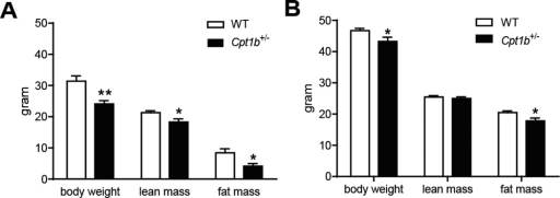 Body composition of mice of HFD feeding. In vivo quantitative magnetic resonance imaging system was used to measure lean and fat mass. (A) 5 months after HFD feeding, (B) 7 months after HFD feeding. *p<0.05, n= 8-7 per group.