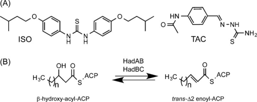 Isoxyl,thiacetazone, and the dehydration step of the FAS-II elongation cycle:(A) structures of ISO and TAC; (B) (3R)-hydroxyacyldehydratases HadAB and HadBC catalyze the (reversible) dehydrationof β-hydroxyacyl-ACP meromycolate precursors to yield trans-Δ2-enoyl-ACP products (the substrates of theenoyl-CoA reductase, InhA) in the FAS-II elongation cycle. The HadABheterodimer is thought to be involved in the early stages of the elongationcycle, whereas the HadBC heterodimer, which displays a greater affinityfor longer fatty acyl substrates than HadAB in vitro, is believedto participate in the late stages of the elongation of the meromycolicacid chain.
