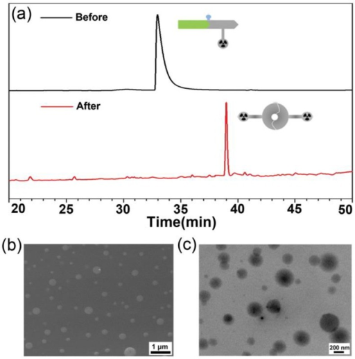 (a) HPLC trace of the incubation mixture of 1-Cold at 100 µM after 4 h incubation with 1 nmol/U of furin at 37 °C (bottom), and HPLC trace of 1-Cold in water (top). (b) SEM images of the nanoparticles in the incubation mixture of 1-Cold at 100 µM after 4 h incubation with 1 nmol/U of furin at 37 °C. (c) TEM images of the nanoparticles in the incubation mixture of 1-Cold at 100 µM after 4 h incubation with 1 nmol/U of furin at 37 °C.