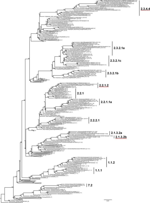 Phylogenetic relationships of recently diverged A/goose/Guangdong /1/1996 (Gs/GD/96)-like H5 hemagglutinin (HA) genes. A maximum likelihood tree of 242 HA nucleotide sequences from Gs/GD/96 lineage of HPAI H5 viruses was constructed with 10 000 local support bootstraps (above branches) using FastTree2 (GTR+GAMMA) and rooted to Gs/GD/96. Selected sequences are representative of all clades to render a condensed but accurate phylogenetic topology while including viruses from diverse countries, vaccine candidates, and human cases. All viruses are A(H5N1) unless labeled otherwise. Newly designated clades are underlined. Collapsed clades indicate viruses that have not been detected since 2012 or earlier. Scale bar denotes nucleotide substitutions per site. Sequence accession numbers are provided in Supplementary Data S2.