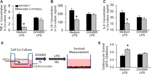 Blockade of exosome release negates the inhibitory effects of WT-MSCs on LPS-triggered inflammatory cytokine production in macrophages and LPS-induced cardiomyocyte death.WT-MSCs significantly suppressed the production of TNF-α (A), IL-1β (B), and IL-6 (C) in co-cultured RAW264.7 cells upon LPS challenge. Such inhibitory effects were offset by addition of GW4869 (20 μM). n = 3 wells, *p < 0.05, vs. RAW264.7 cultured alone. Similar results were observed in three additional, independent experiments. (D) A diagram of cell co-culture system in which cardiomyocytes were cultured in the lower chamber of a 12-well plate pre-coated with laminin (10 μg/ml) and MSCs were cultured in the upper chamber of a 12-well insert. (E) LPS exposure significantly decreased cardiomyocyte survival, whereas it is greatly improved by co-culturing with WT-MSCs. n = 3 wells, *p < 0.05, vs. cardiomyocytes cultured alone. Addition of GW4869 (20 μM) offset WT-MSC-elicited protective effects on LPS-triggered myocyte death. Similar results were observed in two additional, independent experiments.