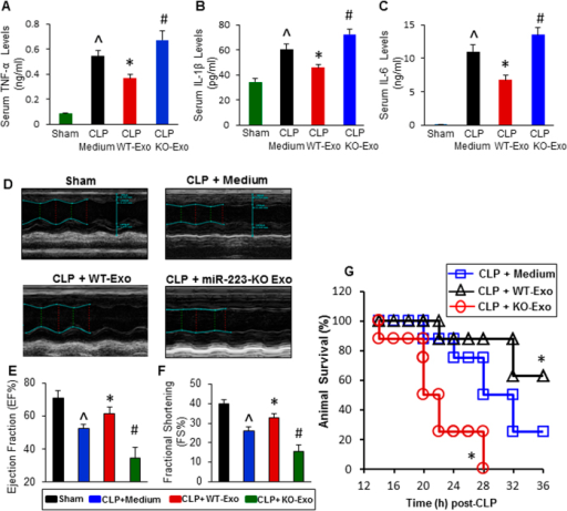 The effects of WT-exosomes and miR-223-KO exosomes on CLP-induced inflammatory response, cardiac dysfunction and animal mortality.(A–C) CLP-mice treated with WT-exosomes (n = 11) showed lower levels of serum TNF-α (A), IL-1β (B), and IL-6 (C), whereas CLP-mice injected with KO-exosomes (n = 11) exhibited higher levels of circulating TNF-α (A), IL-1β (B), and IL-6 (C), compared with those treated with incomplete DMEM medium (n = 10) (^p < 0.05 vs. shams; *p < 0.05 vs. CLP + medium; #p < 0.05 vs. CLP + medium). (D) Results of echocardiography measurement showed that values of the left ventricular ejection fraction (EF%, E) and the fractional shortening (FS%, F) were significantly decreased in CLP mice injected with incomplete DMEM medium (n = 10), compared with shams (n = 8). Remarkably, the reduction of EF% and FS% was attenuated in WT-exosome-treated CLP mice (n = 11); whereas it was aggravated in CLP mice administrated with miR-223-KO exosomes (n = 11) (^p < 0.05 vs. shams; *p < 0.05 vs. CLP + medium; #p < 0.05 vs. CLP + medium). (G) The survival of CLP-mice was significantly improved by WT-exosome treatment, whereas it was worse by miR-223-KO exosome injection (n = 8, *p < 0.05 vs. CLP + medium).