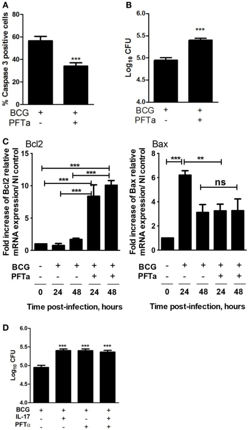 Blockade of p53 impairs apoptosis of infected macrophages and bacterial growth control. BMDM were infected with M. bovis BCG in the presence (+) or absence (−) of the p53 inhibitor PFTα. Four days post-infection (A) caspase-3 activation was assessed by immunofluorescence and (B) the bacterial load was assessed as indicated before. Representative images used for the calculations are in Figure S3 in Supplementary Material. (C) At 24 or 48 h post-M. bovis BCG infection, the Bcl2 and Bax mRNA was determined by real-time PCR. The fold increase of Bcl2 or Bax mRNA over the NI control was calculated for each independent experiment. (D) BMDM were left uninfected or infected with M. bovis BCG in the presence or absence of IL-17 or of PFTα as indicated. Four days post-infection the bacterial load was assessed as indicated before. Represented are the mean ± SE of three independent experiments. Significance determined by Student's t test (***p < 0.001).